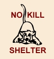 A No-Kill Shelter