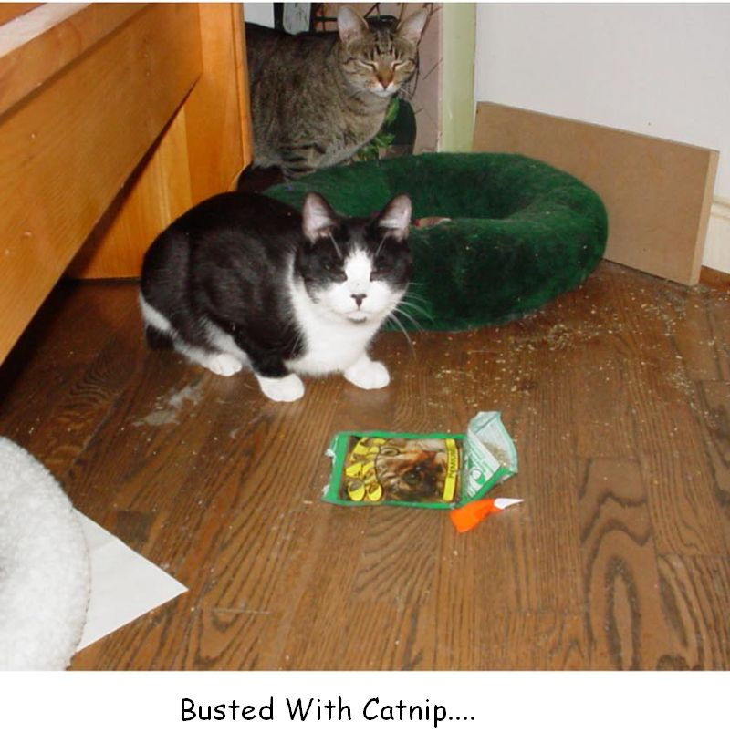 Busted with Catnip